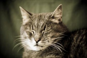 cat-eye-blinks