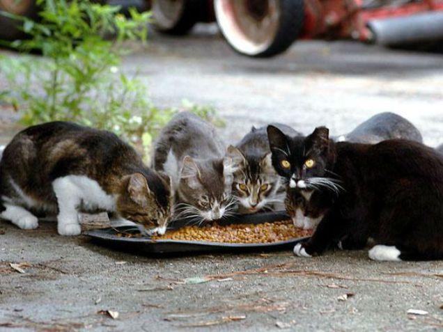 feral cats feeding