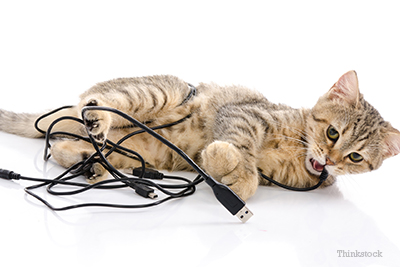 kitten-wires